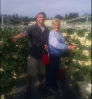 ben and grandma picking strawberries